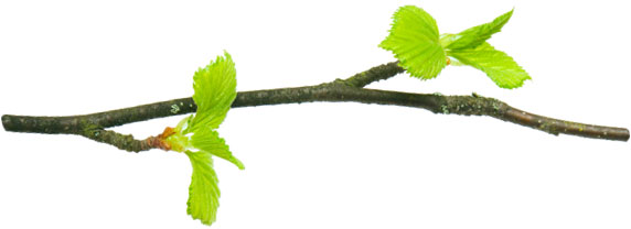branch with leaves - separator